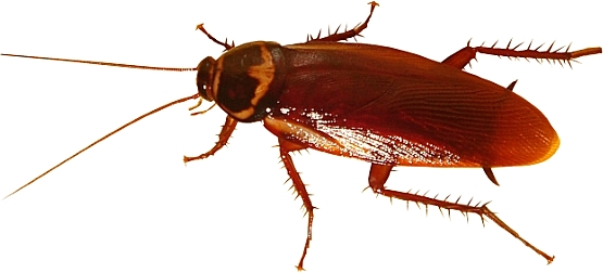 Fort Worth cockroach control